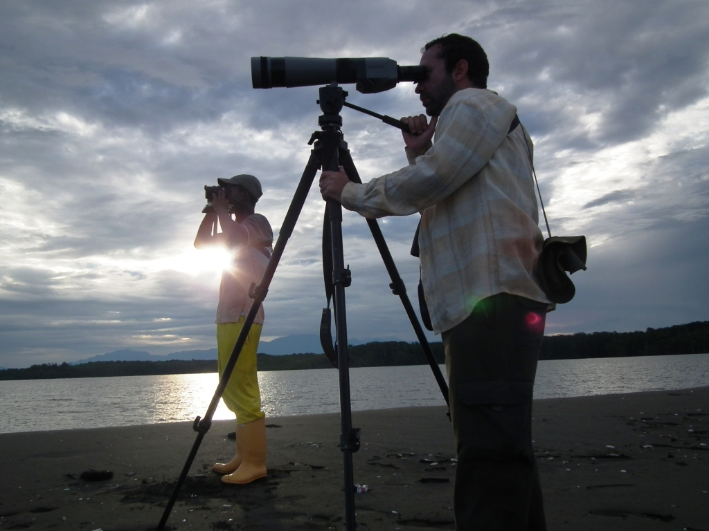 Shorebird Surveys in Colombia